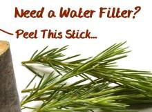 Pine Stick Water Filter